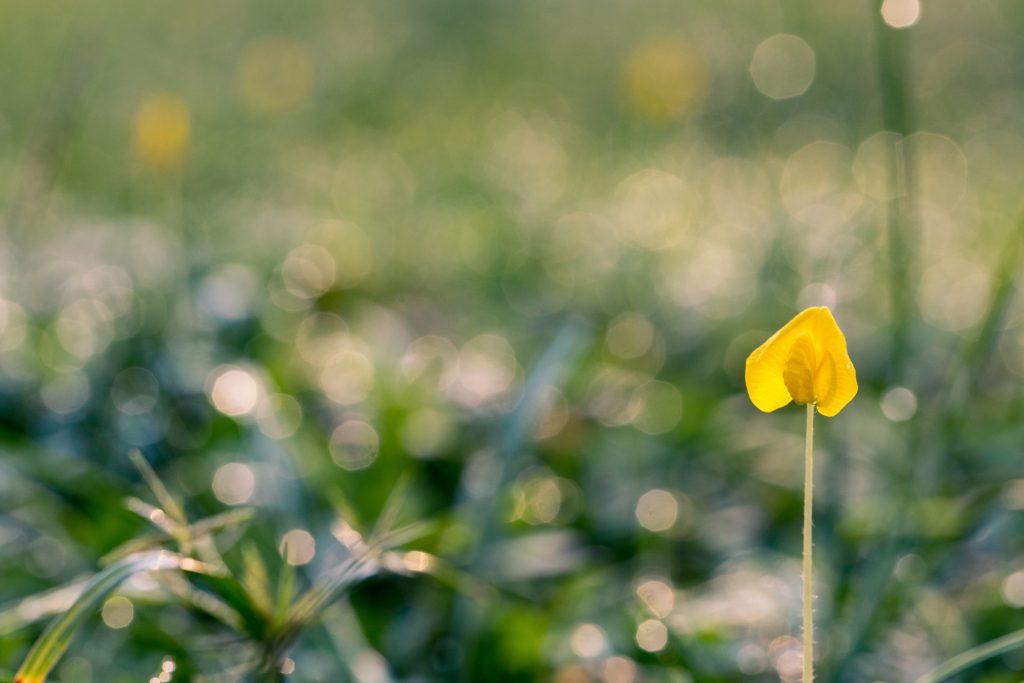 bloem met geblurde achtergrond